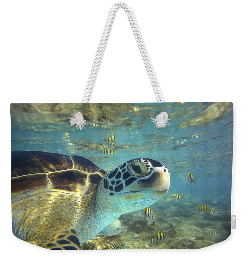 00451417 Weekender Tote Bag featuring the photograph Green Sea Turtle Balicasag Island by Tim Fitzharris
