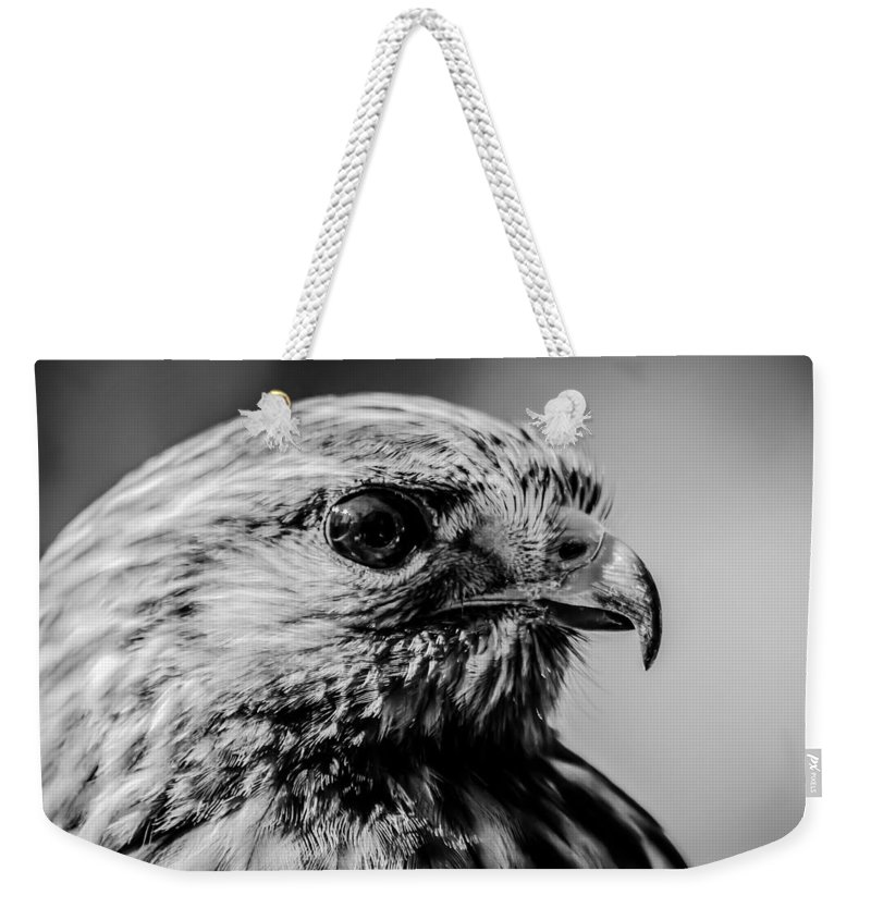 Hawk Weekender Tote Bag featuring the photograph Harris Hawk  by Alex Grichenko