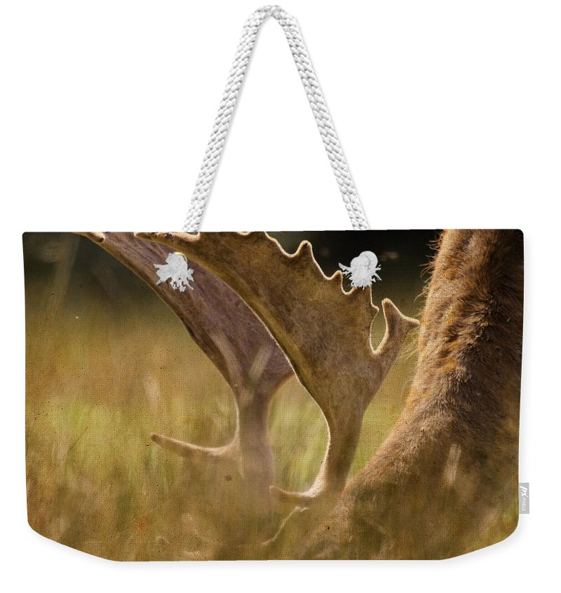 Fallow Deer Weekender Tote Bag featuring the photograph Having A Lunch by Angel Tarantella