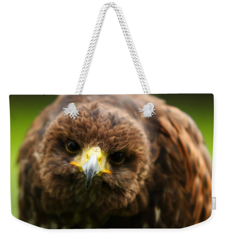 Buzzard Weekender Tote Bag featuring the photograph Hello Mate by Angel Ciesniarska