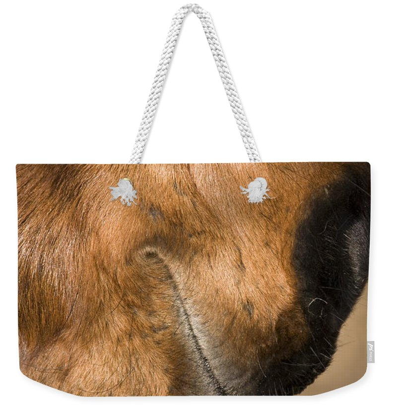 Horse Weekender Tote Bag featuring the photograph Horse Portrait by Ian Middleton