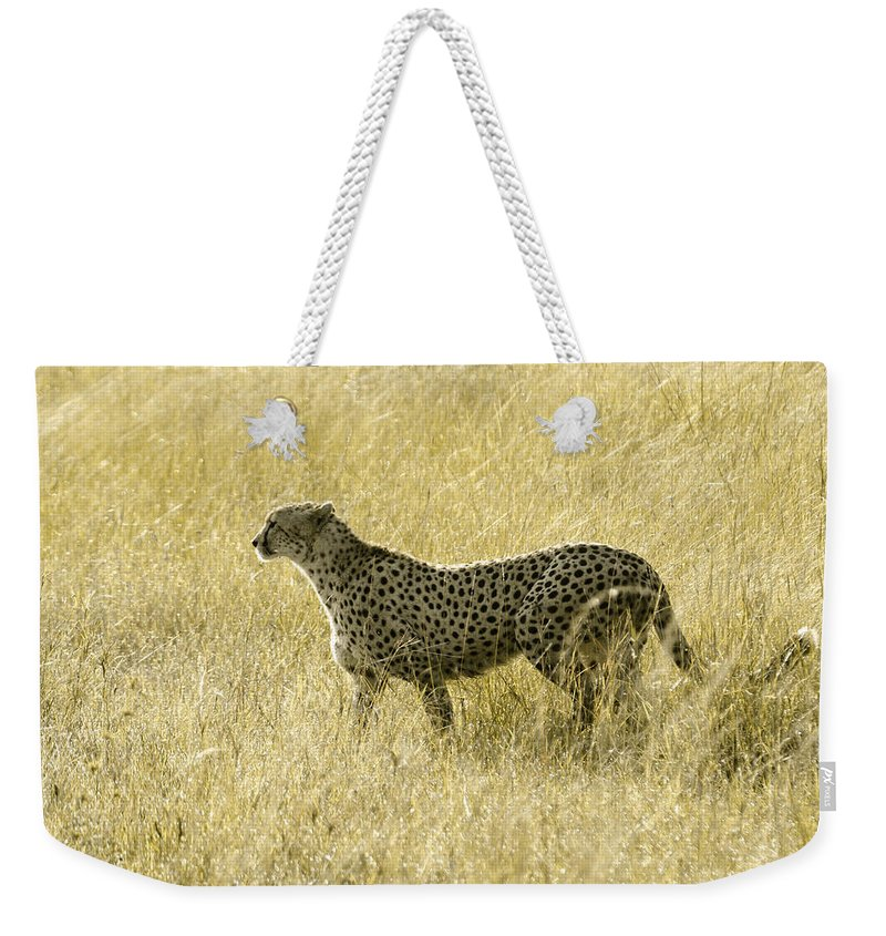 Africa Weekender Tote Bag featuring the photograph Hunting Cheetah by Michele Burgess