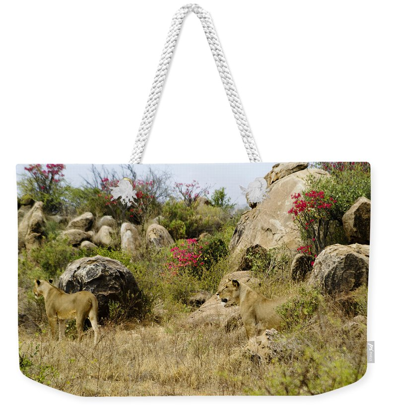 Lion Weekender Tote Bag featuring the photograph Hunting Lionesses by Michele Burgess