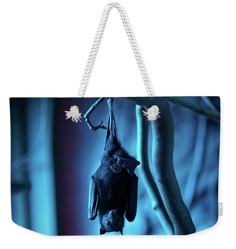 Bat Weekender Tote Bag featuring the photograph I Don't Bite Give Me Five by Ferenc Boloni