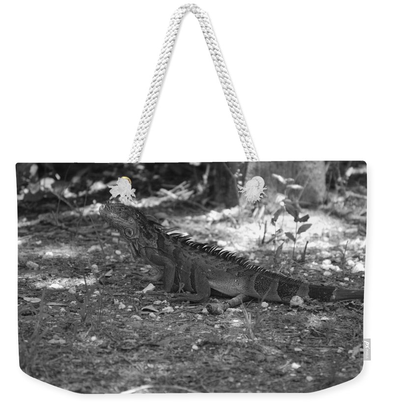 Black And White Weekender Tote Bag featuring the photograph I Iguana by Rob Hans