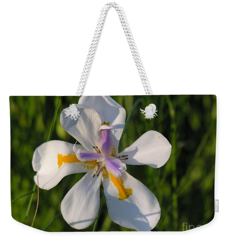 Lilly Weekender Tote Bag featuring the photograph Iris by Diane Greco-Lesser
