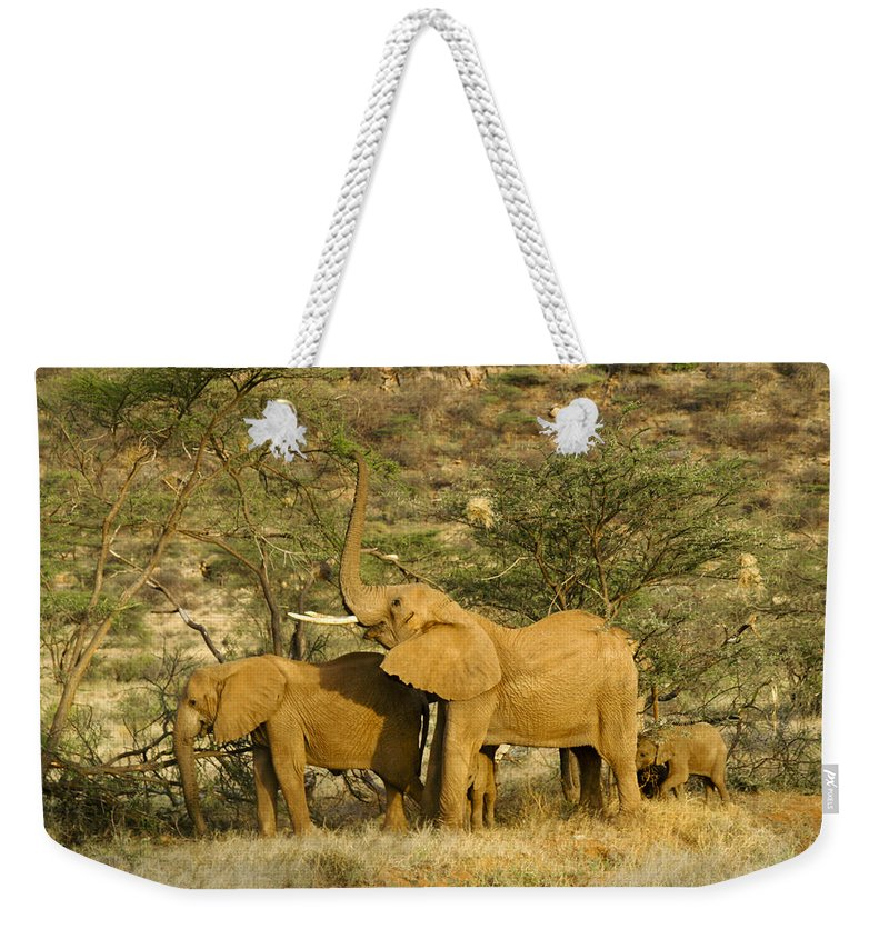 Africa Weekender Tote Bag featuring the photograph It's A Stretch by Michele Burgess