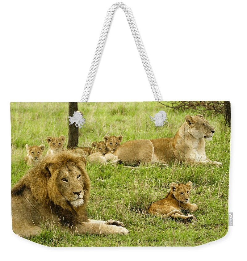 Lion Weekender Tote Bag featuring the photograph It's All About Family by Michele Burgess