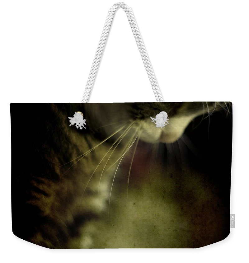 Sleep Weekender Tote Bag featuring the photograph Just Sleep by Angel Ciesniarska
