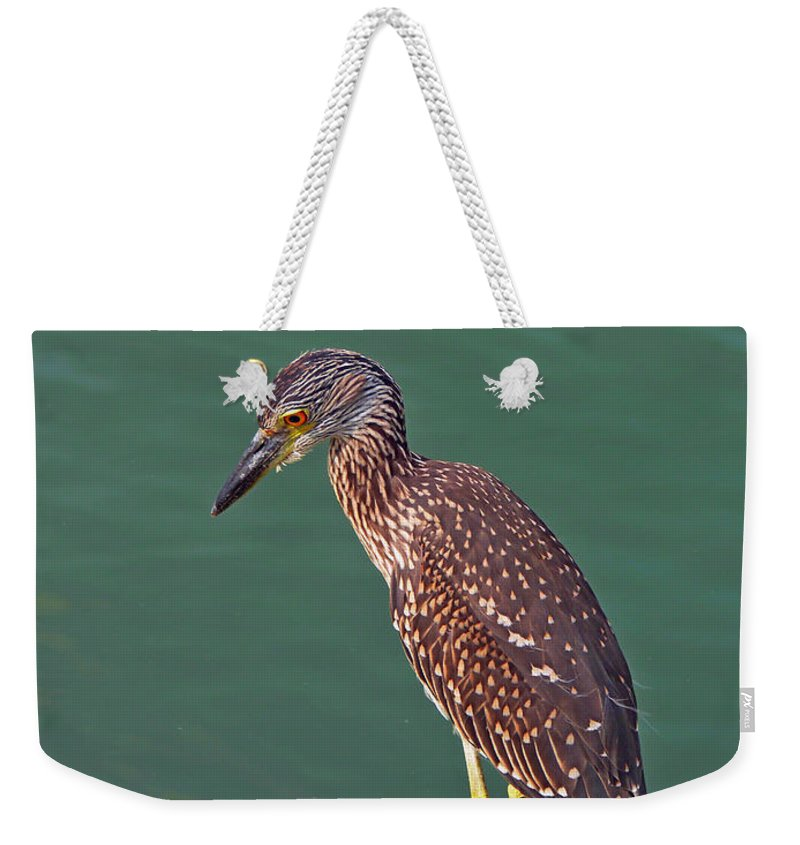 Juvenile Blacked Crowned Night Heron Weekender Tote Bag featuring the photograph Juvenile Black Crowned Night Heron by Robert Brown