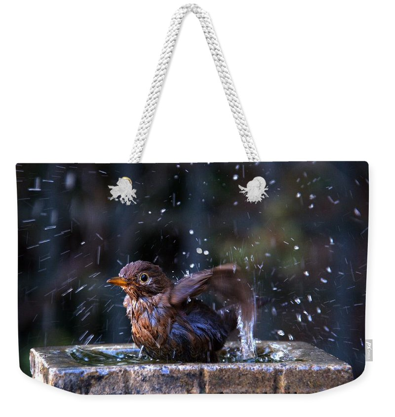 Blackbird Weekender Tote Bag featuring the photograph Juvenile Blackbird by Chris Day