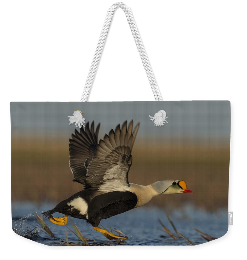 King Eider Weekender Tote Bag featuring the photograph King Eider by Tom Ingram