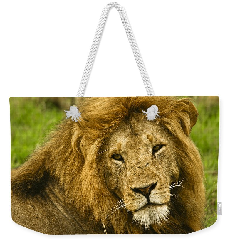 Lion Weekender Tote Bag featuring the photograph King Of The Savanna by Michele Burgess