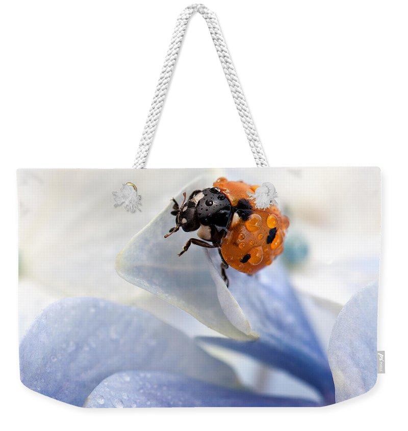 Ladybug Weekender Tote Bag featuring the photograph Ladybug by Nailia Schwarz
