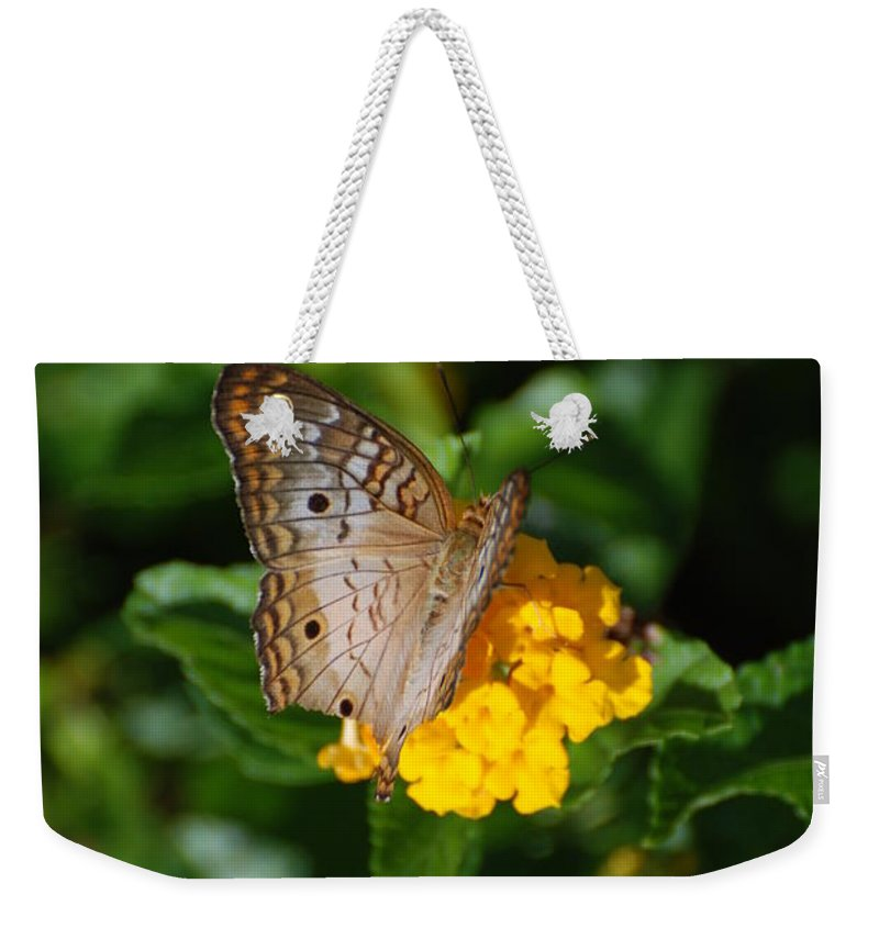 Butterfly Weekender Tote Bag featuring the photograph Landed by Rob Hans