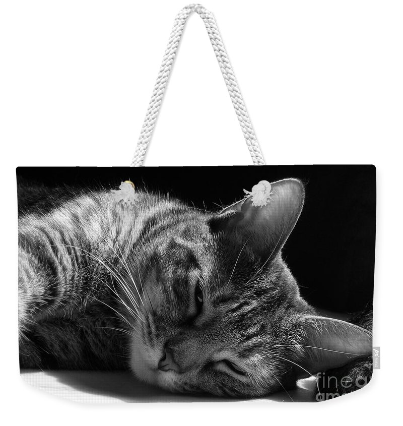 Cat Weekender Tote Bag featuring the photograph Lazy Afternoon by Maria Bonnier-Perez