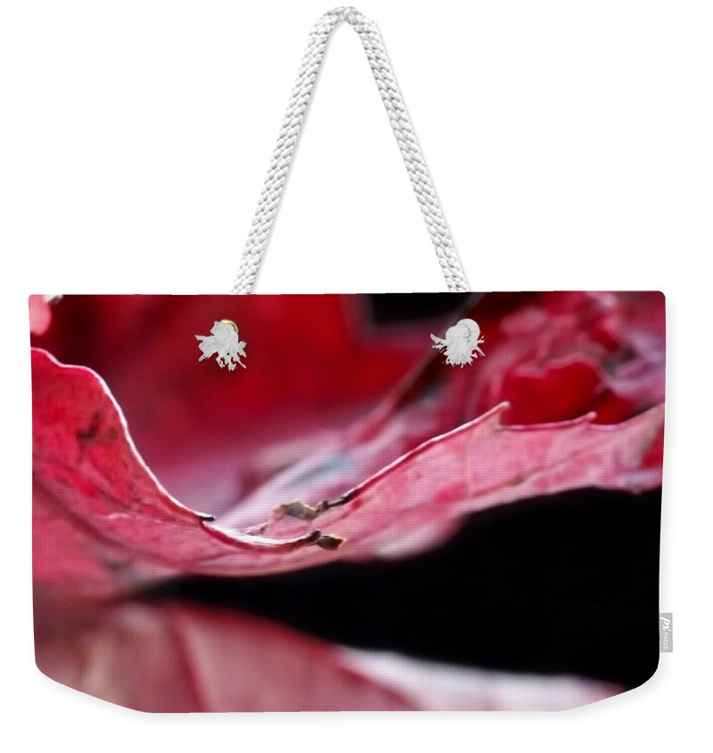 Abstract Weekender Tote Bag featuring the photograph Leaf Study V by Lauren Radke