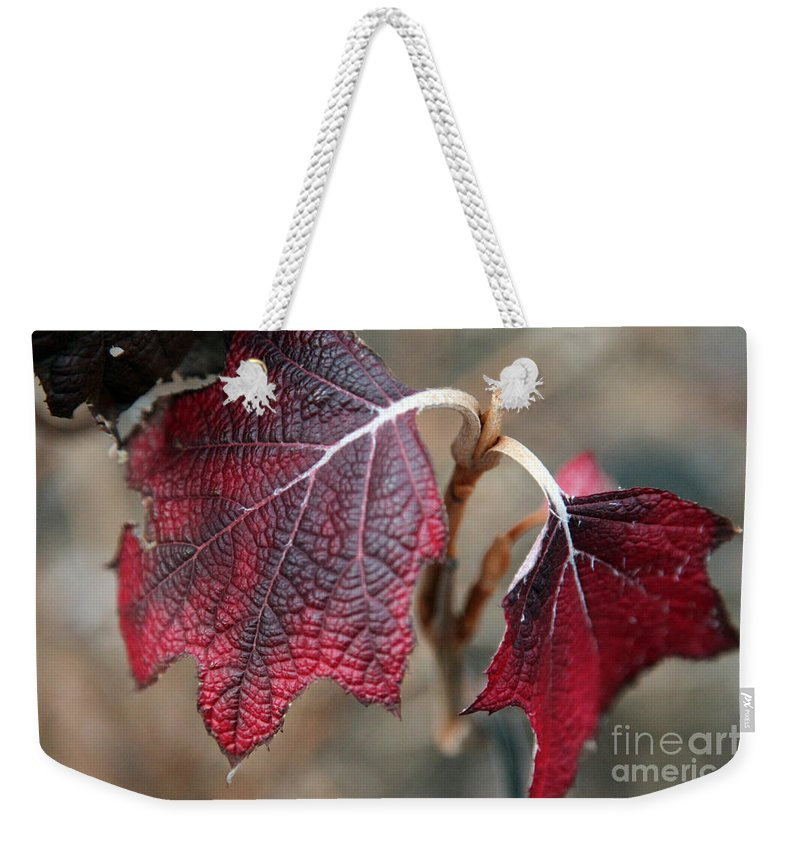 Fall Weekender Tote Bag featuring the photograph Leaves by Amanda Barcon
