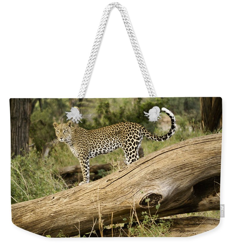 Africa Weekender Tote Bag featuring the photograph Leopard In The Forest by Michele Burgess