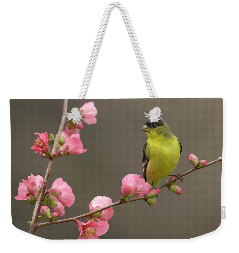 Birds Weekender Tote Bag featuring the photograph Lesser Goldfinch by Doug Herr