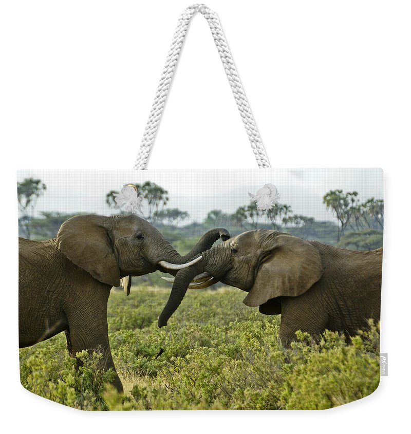Africa Weekender Tote Bag featuring the photograph Let's Get Acquainted by Michele Burgess