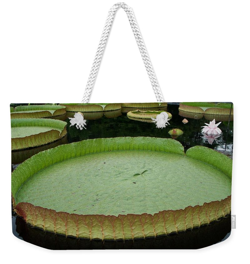 Lily Weekender Tote Bag featuring the painting Lily Pads by Eric Schiabor