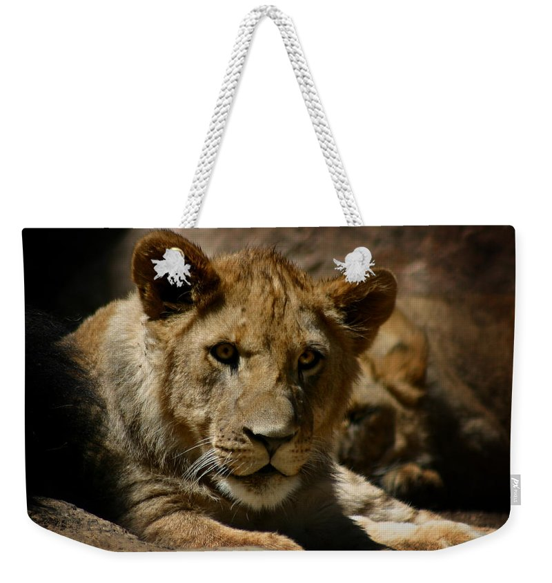 Lion Weekender Tote Bag featuring the photograph Lion Cub by Anthony Jones