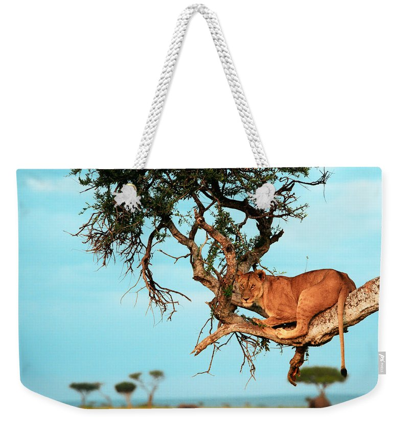 Africa Weekender Tote Bag featuring the photograph Lioness In Africa by Sebastian Musial