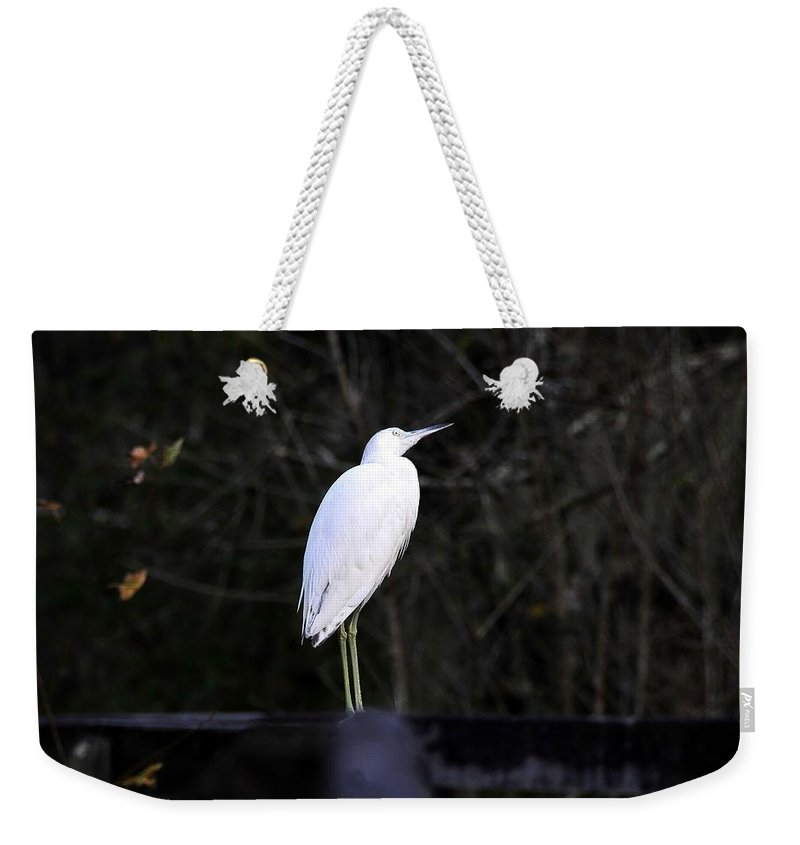 Looking Weekender Tote Bag featuring the photograph Looking by David Lee Thompson