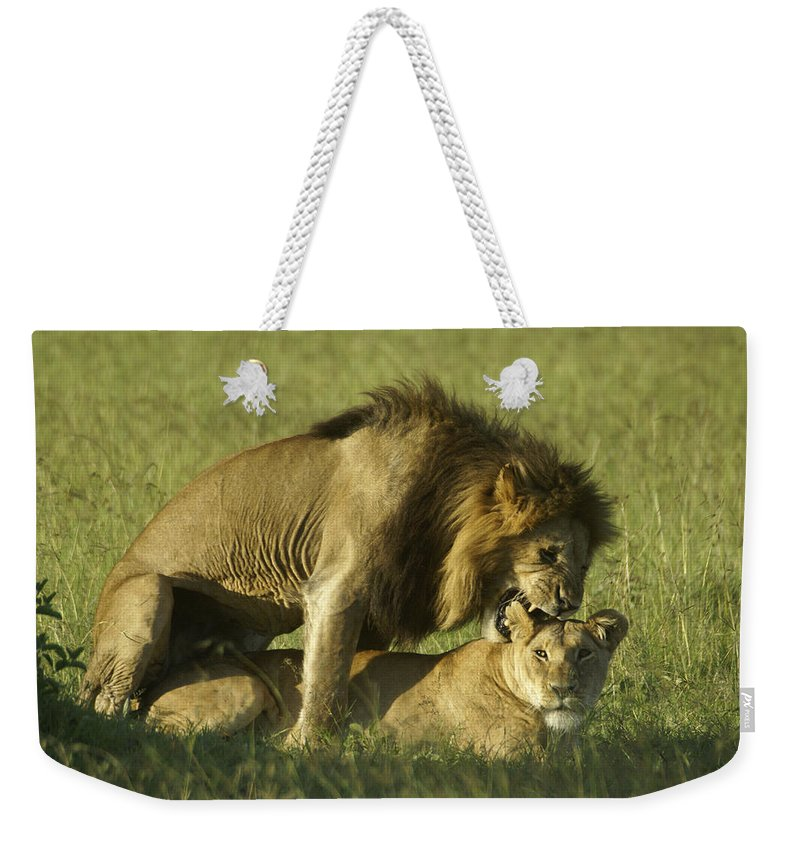 Africa Weekender Tote Bag featuring the photograph Love Bite by Michele Burgess