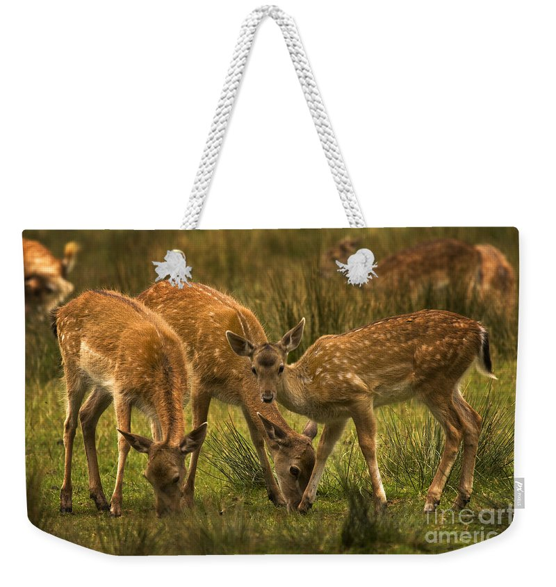 Fallow Deer Weekender Tote Bag featuring the photograph Lunch Time by Angel Ciesniarska
