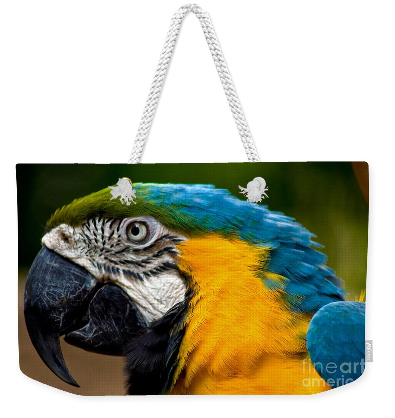 Macaw Weekender Tote Bag featuring the photograph Macaw by Thomas Marchessault
