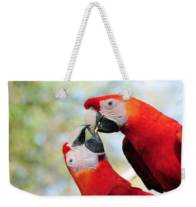 Bird Weekender Tote Bag featuring the photograph Macaws by Steven Sparks