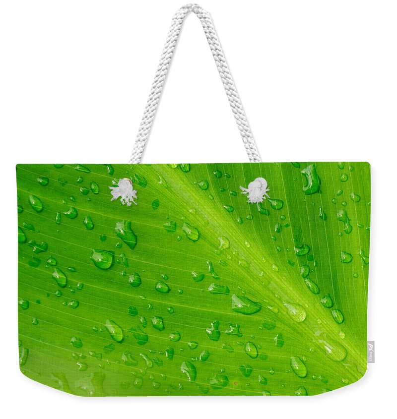 Abstract Weekender Tote Bag featuring the photograph Macro Closeup Of Waterdrops On A Leaf by John Williams