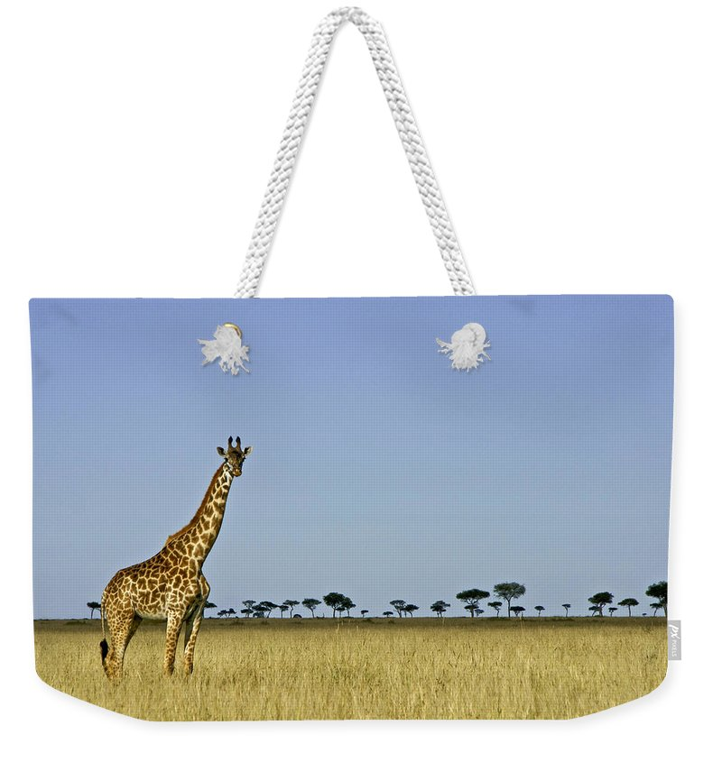 Africa Weekender Tote Bag featuring the photograph Majestic Giraffe by Michele Burgess