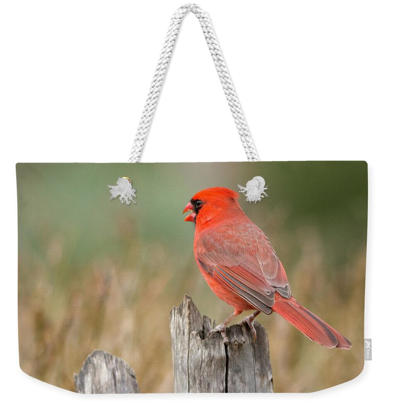 Bird Weekender Tote Bag featuring the photograph Male Cardinal by David Waldrop