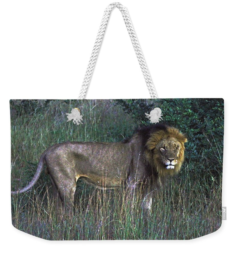 Zimbabwe Weekender Tote Bag featuring the photograph Male Lion by Tony Murtagh