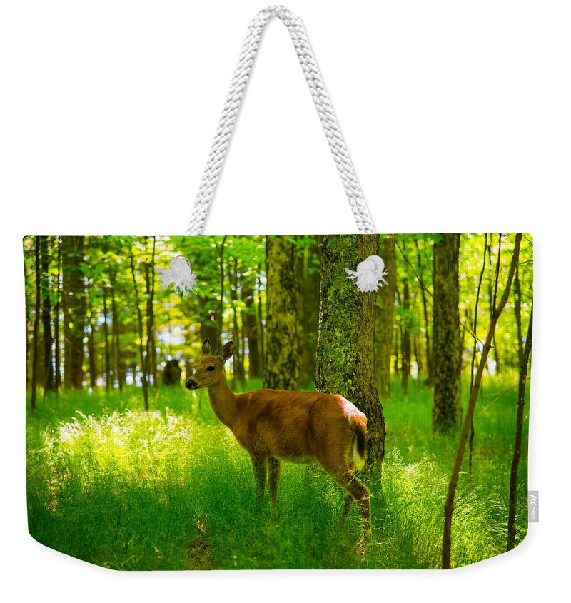 Whitetail Deer Weekender Tote Bag featuring the photograph Michigan Whitetail by Michael Tucker