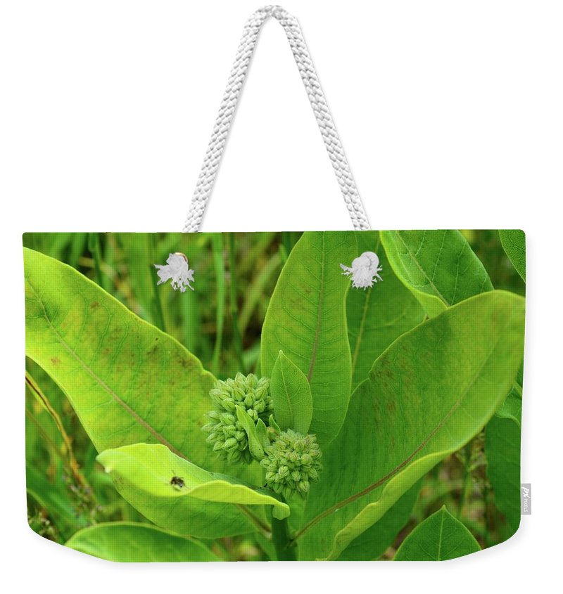 Nature Weekender Tote Bag featuring the photograph Milkweed Flower Buds by Lyle Crump
