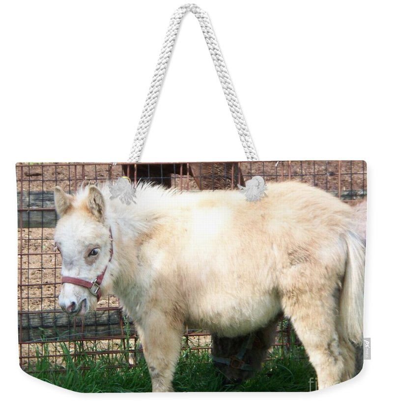 Miniature Horse Weekender Tote Bag featuring the painting Miniature Horse by Eric Schiabor