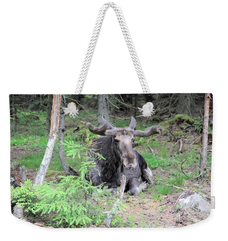 Elk Weekender Tote Bag featuring the photograph Moose by Renee Pettersson