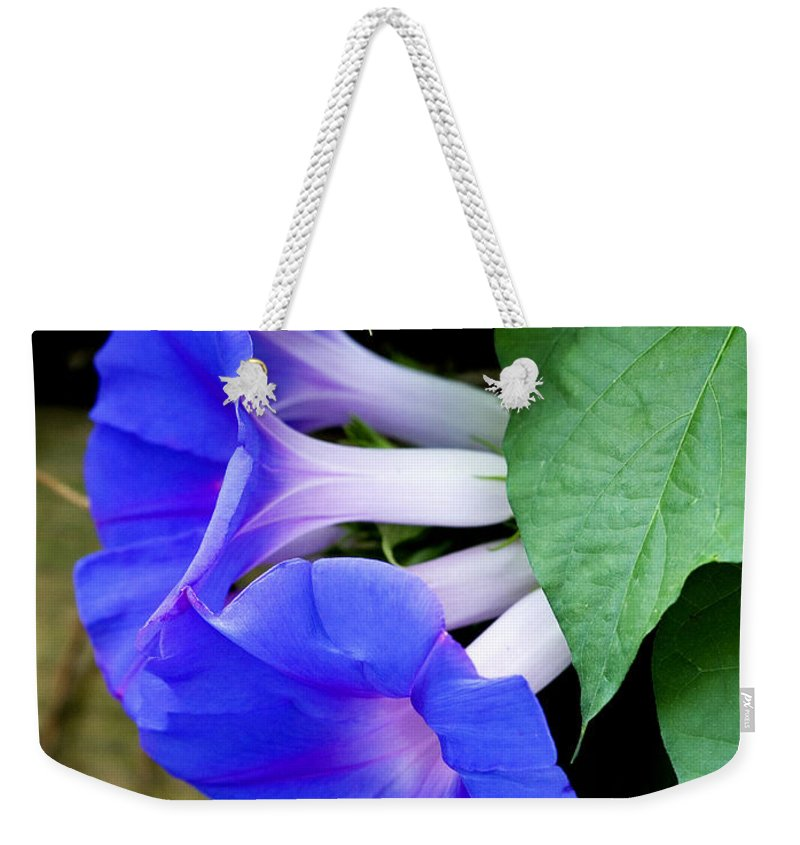 Morning Glory Weekender Tote Bag featuring the photograph Morning Glory by Marilyn Hunt