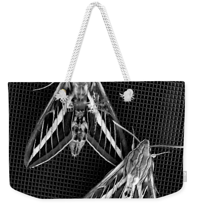 Moths Weekender Tote Bag featuring the photograph Moths by Kelley King