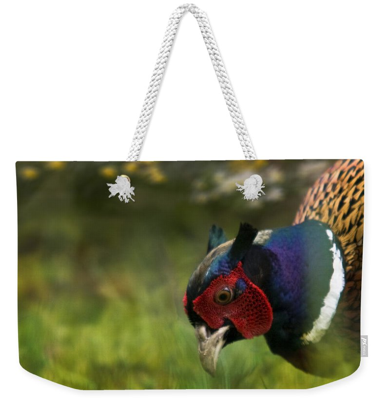 Spring Weekender Tote Bag featuring the photograph Mr Pheasant by Angel Tarantella