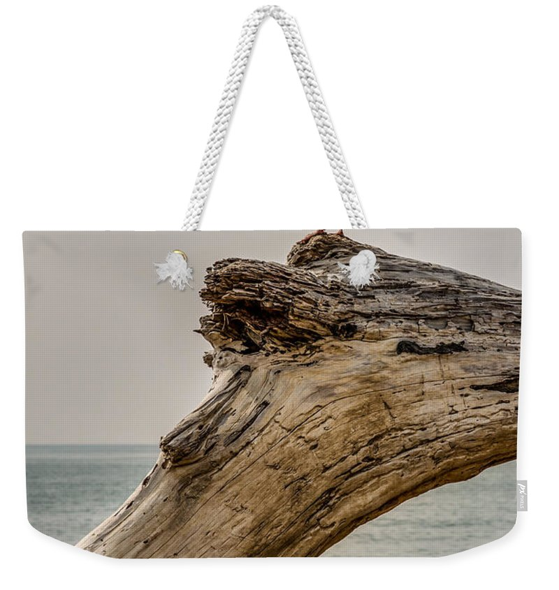 Emma Wood Weekender Tote Bag featuring the photograph Gull On Driftwood by Patti Deters
