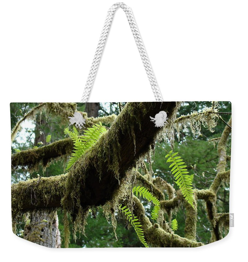 Fern Weekender Tote Bag featuring the photograph OFFICE ART Forest FERNS Green Fern Giclee Prints Baslee Troutman by Patti Baslee