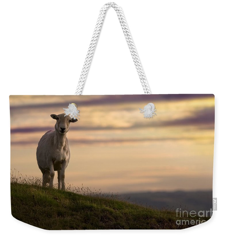 Sheep Weekender Tote Bag featuring the photograph On The Top Of The World by Angel Ciesniarska