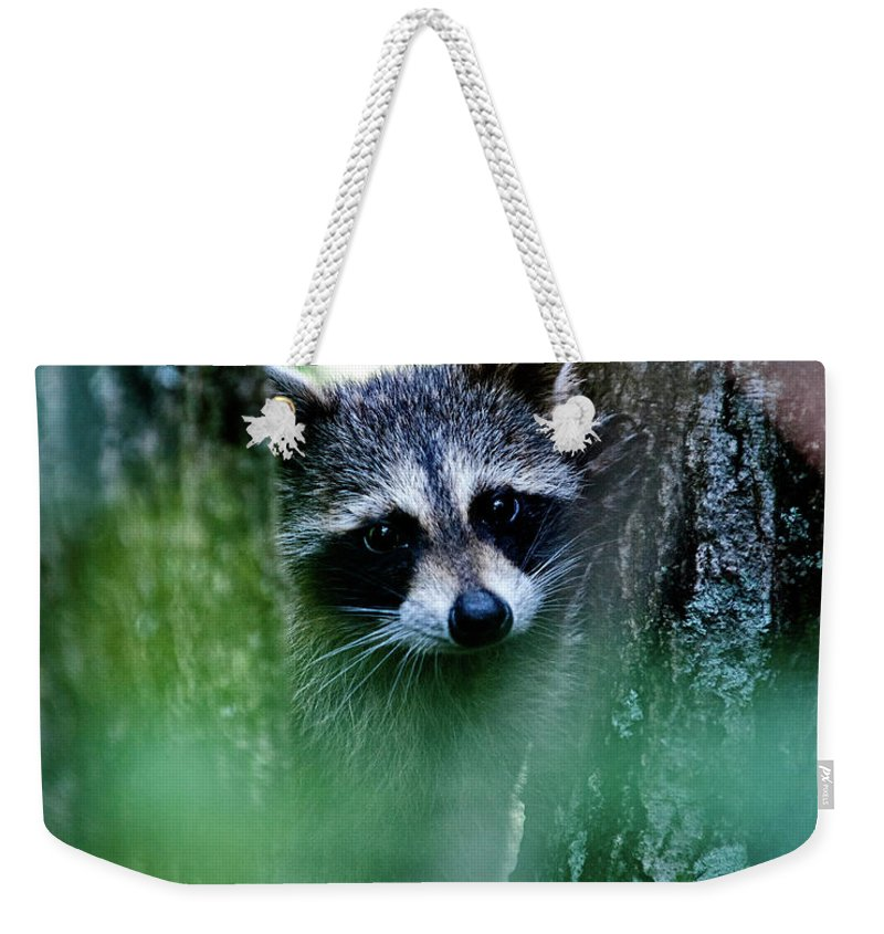 Racoon Weekender Tote Bag featuring the photograph On Watch by Christopher Holmes