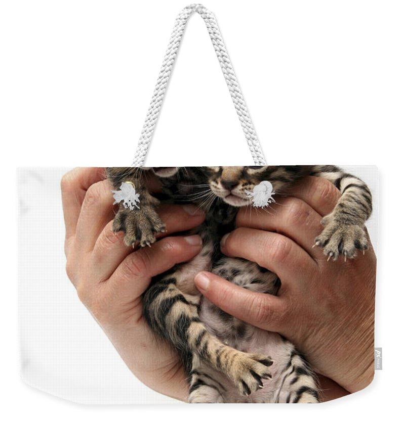 Cat Weekender Tote Bag featuring the photograph One Week Old Kittens by Yedidya yos mizrachi