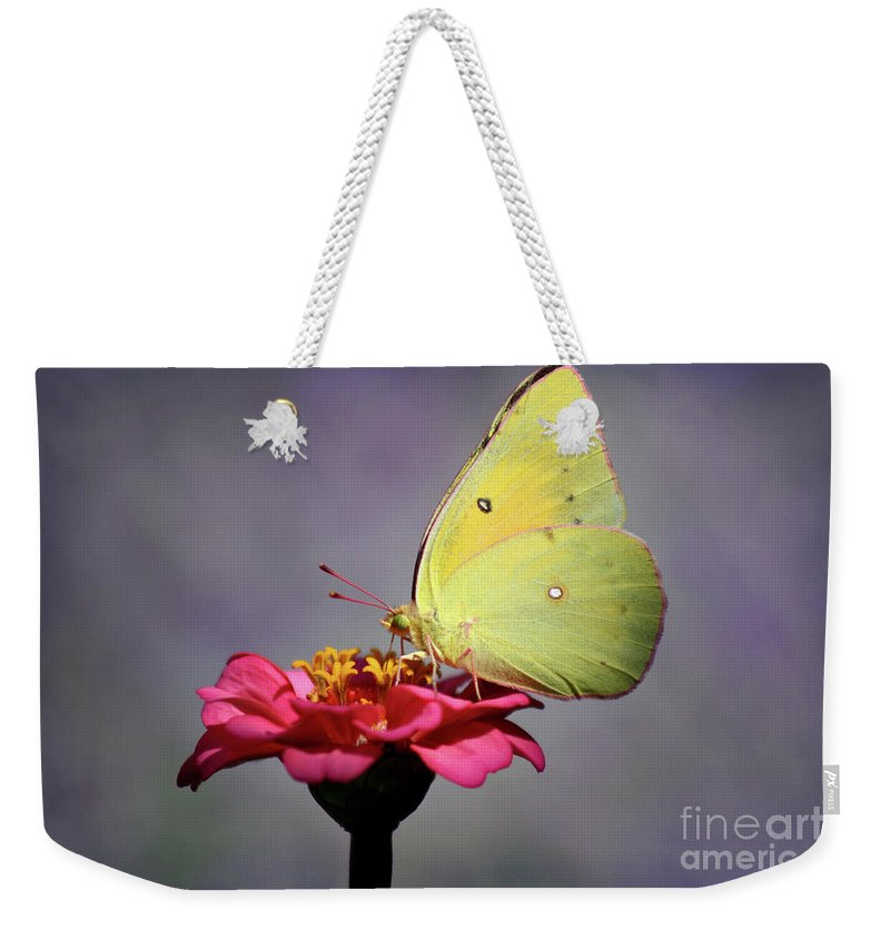 Butterfly Weekender Tote Bag featuring the photograph Orange Sulphur Butterfly Portrait by Karen Adams